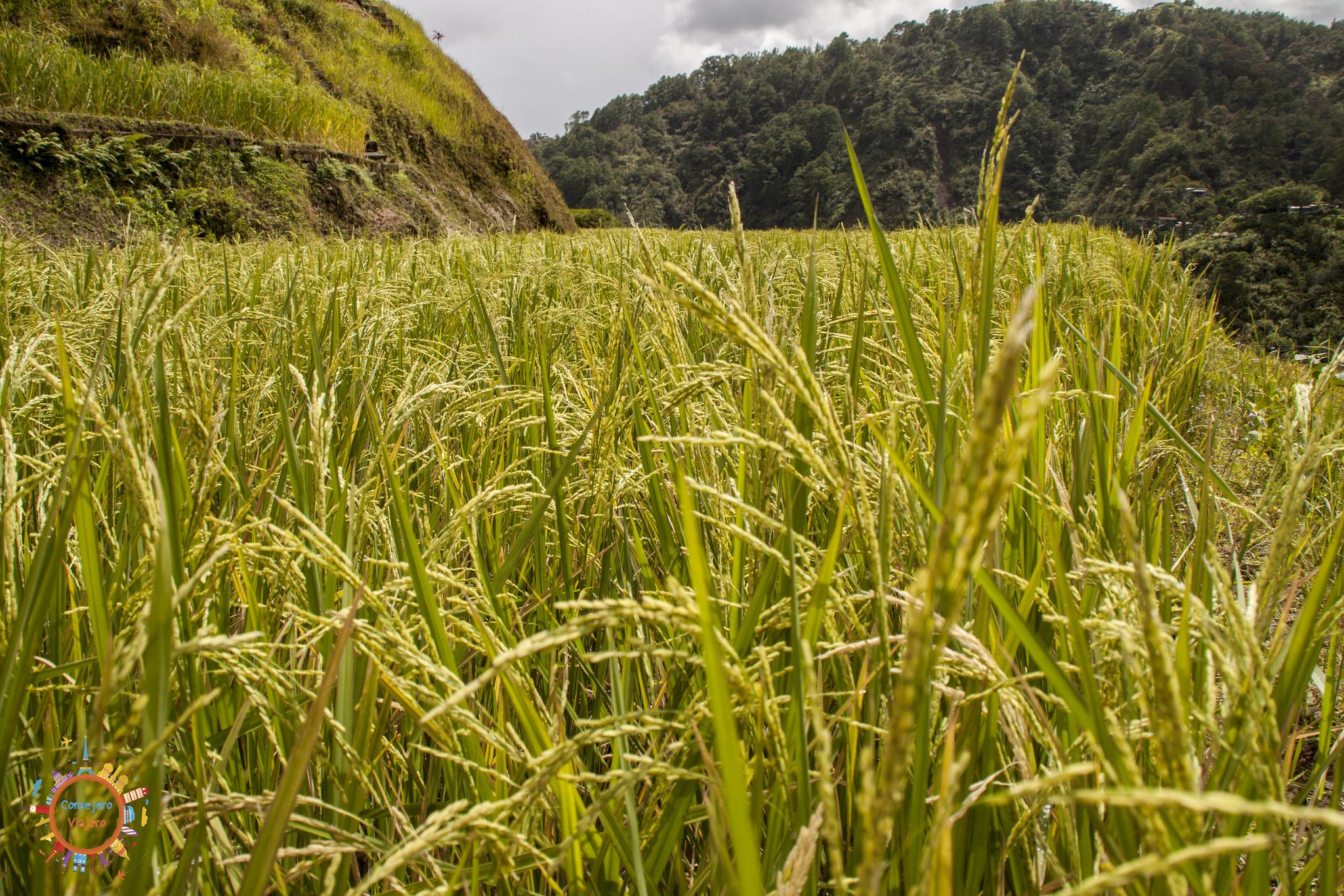 De Sagada a Banaue