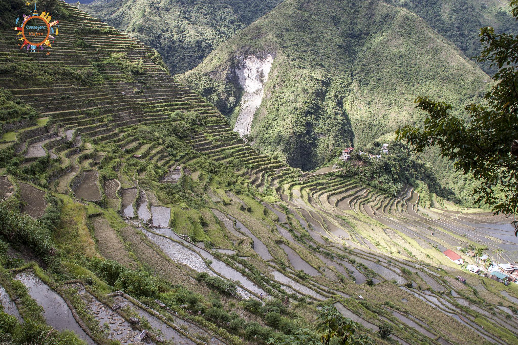 banaue rice fields