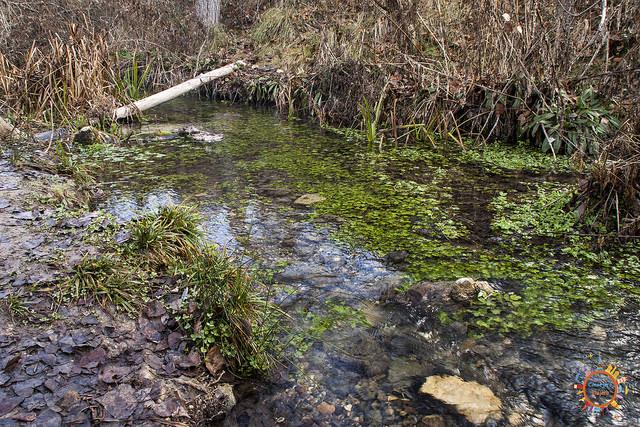 cauce rio vinalopo
