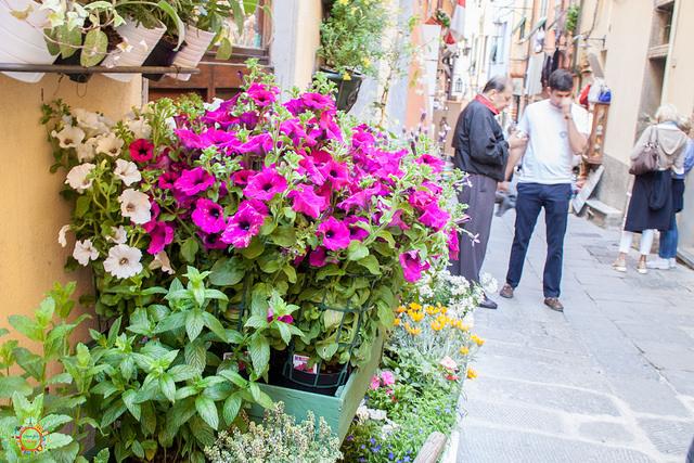 portovenere streets (2)