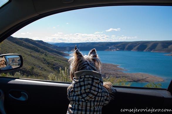Viajar con tu mascota, ellos también merecen un viaje