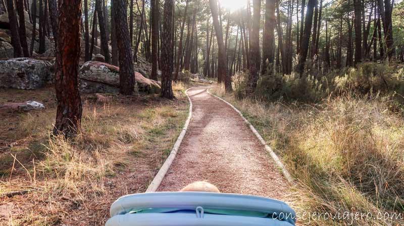 ruta-accesible-pinares-del-rodeno